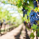 Travel, Wine: Wine Marketing & Tourism Conference Moving to Eugene, Oregon