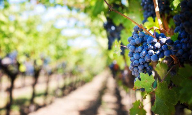 Travel, Wine: Wine Marketing & Tourism Conference Moving to Eugene, Oregon