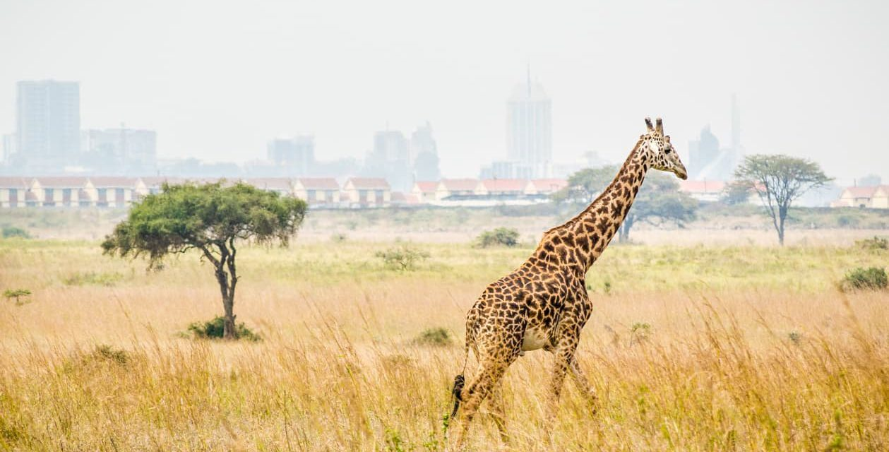 Travel: These 5 African Cities are More than Meets the Eye