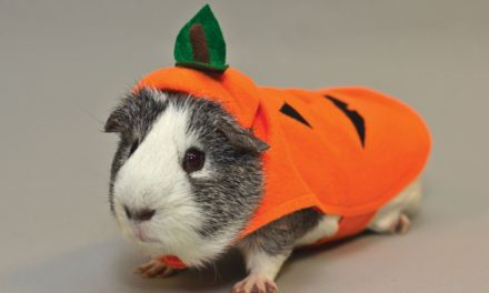 Halloween: PetSmart unveils Halloween collection featuring adorable pet costumes