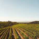 2019 Winegrape Harvest Begins in Sonoma County; Dutcher Crossing, Gloria Ferrer, Iron Horse