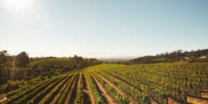 scheid-family-vineyard-harvest-daily-ovation