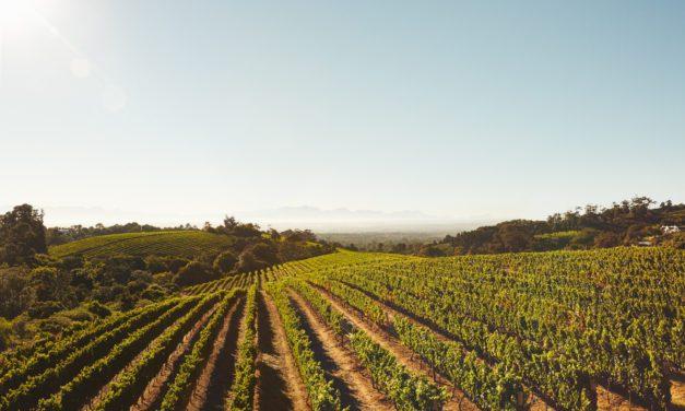 2019 Winegrape Harvest Begins in Sonoma County; Dutcher Crossing, Gloria Ferrer, Iron Horse
