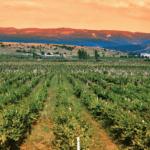 Los Angeles Wine: Santa Barbara Vintners Receives Grant to Boost Marketing in LA