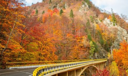 Watch Nature Work: The Best Fall Roadtrips Around the World