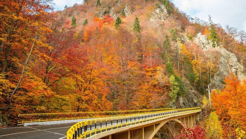 Watch Nature Work: The Best Fall Roadtrips Around the World