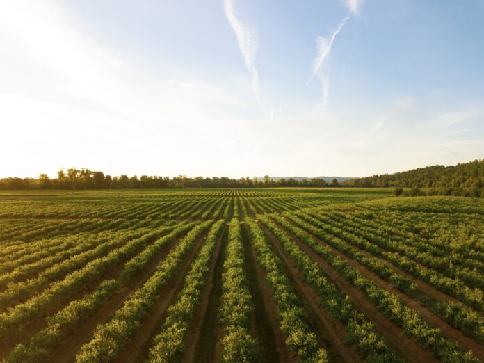 oregon-wine-country