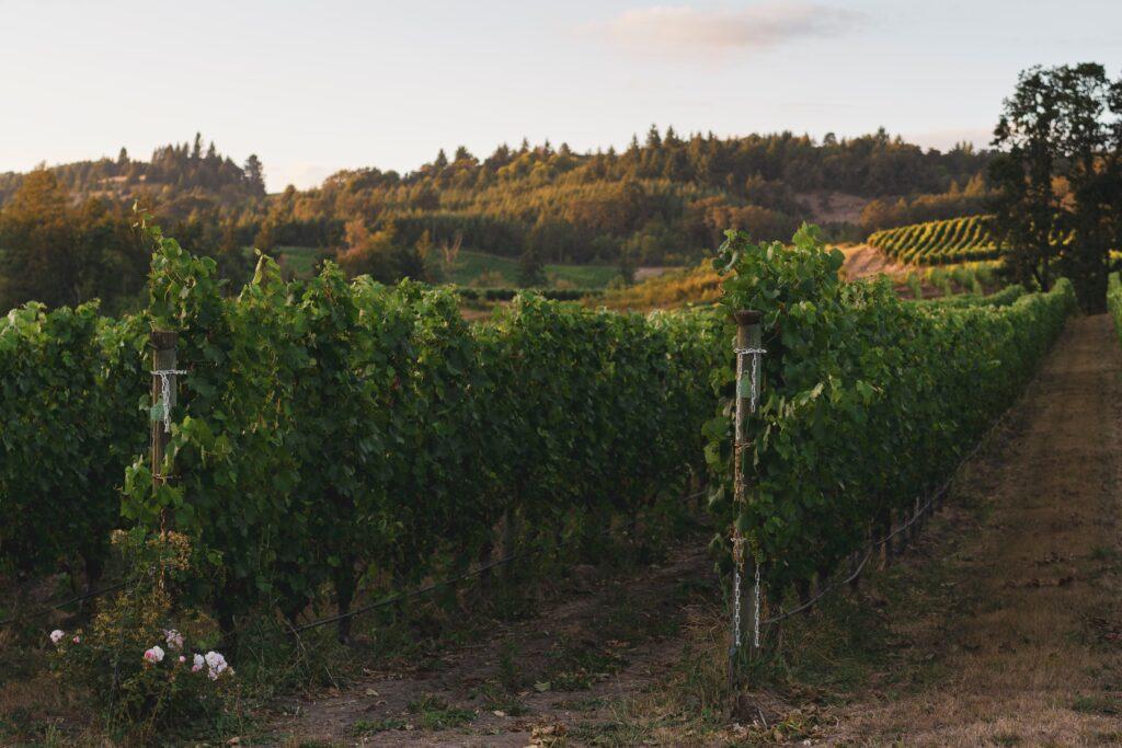 Oregon's Willamette Valley Wine Region