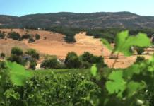 judgement-napa-wines
